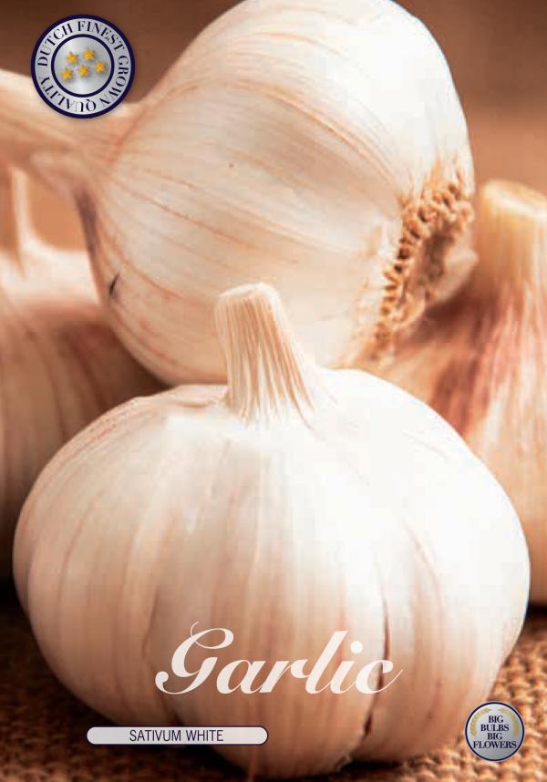 Garlic Sativum White