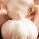 Garlic Sativum White